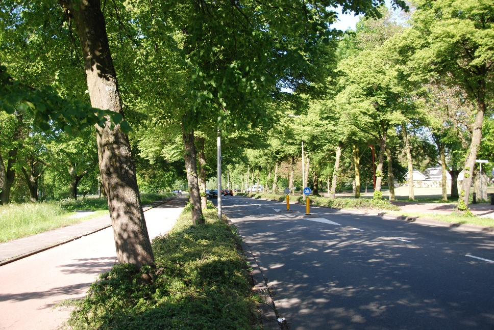 http://www.harmjschoonhoven.com/rivieren-en-dreven/dreven/marn.jpg