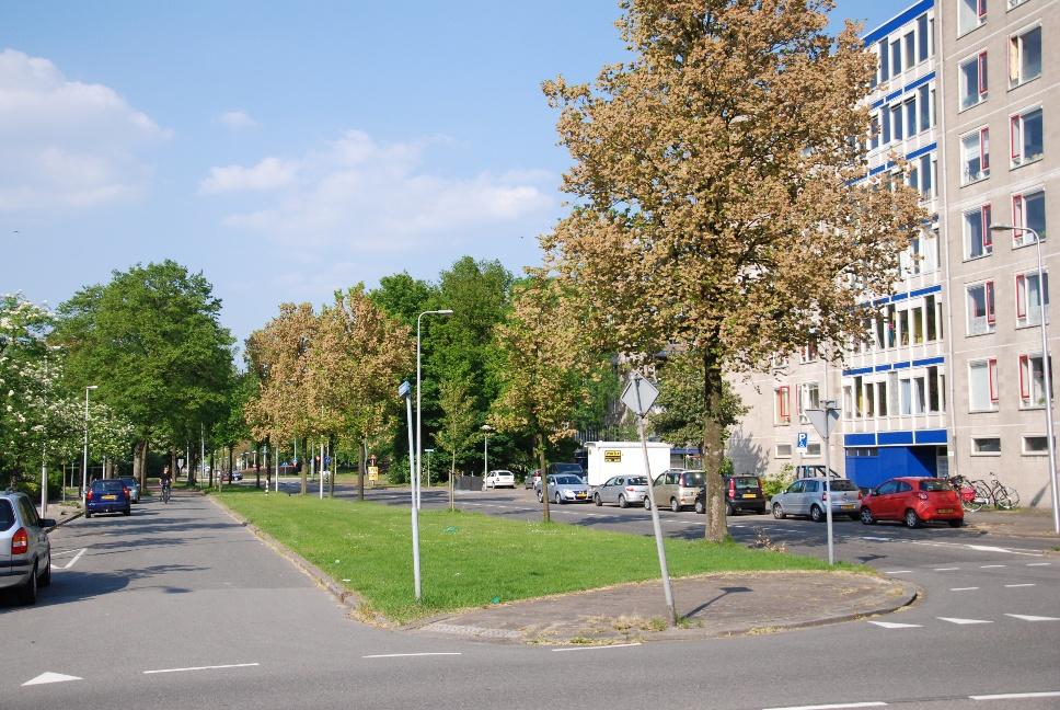 http://www.harmjschoonhoven.com/rivieren-en-dreven/dreven/maro.jpg